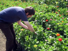 Opmars Polen in middenkader tuinbouw